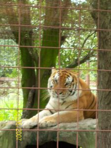 Wild cat sanctuary