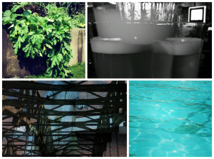 1) Our garden 2) Out for beers 3)Godzilla I made from a double-exposure phone app 4) Swim time!