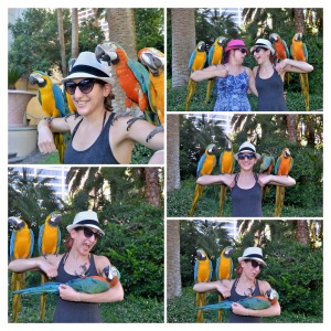Caesars Entertainment-CLV-Habitat Birds-id150784212-COLLAGE