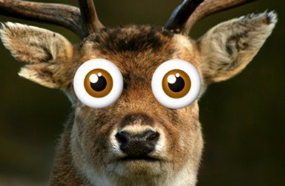 deer-headlight-618x264